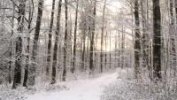 OL-SchneemorgenWald-0612-web