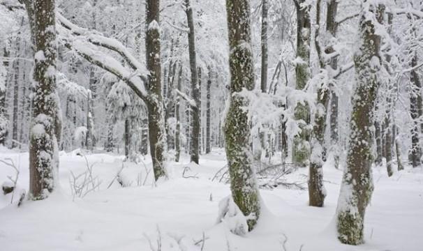 OL-Schnee3-0401