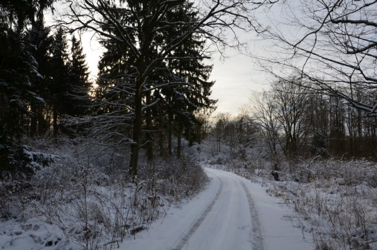 OL-Winterbild-Katrin-0802