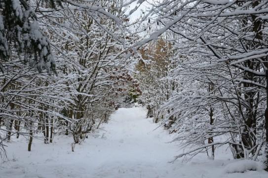 OL-WinterbildKatrin1-0802
