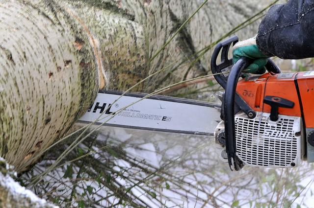 Sturmschäden: Im Vogelsberg sind mehrere Bäume umgefallen. Symbolbild: Boomkap Buytenwegh Zoetermeer by FaceMePLS/flickr, Lizenz CC by 2.0