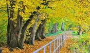 OL-Herbstaub9-2810