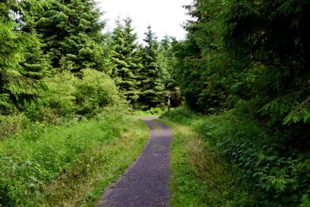 ...und wunderschöne Waldwege laden zum Wandern ein.