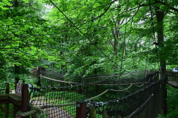 Auch der Baumkronenpfad bietet eine spannende Perspektive von oben.