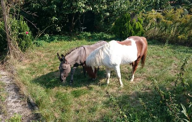ol-esel_pony-1209