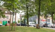 Die Linden sollen weichen. Foto: bk