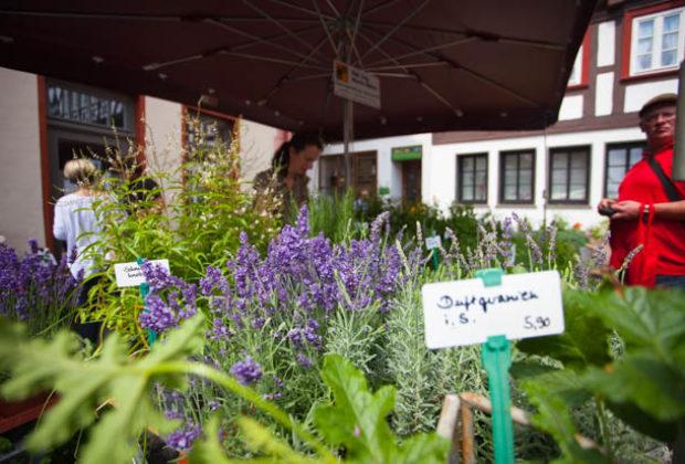 ol-kräuter-undmärchentag2018-Lingelcreek (47 von 119)
