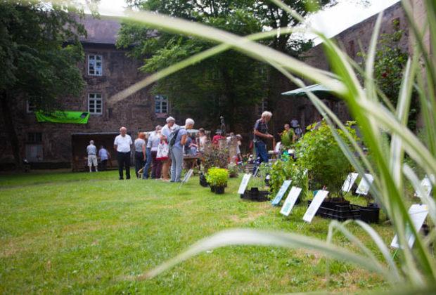 ol-kräuter-undmärchentag2018-Lingelcreek (61 von 119)
