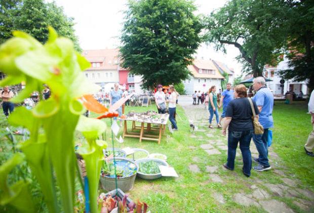 ol-kräuter-undmärchentag2018-Lingelcreek (65 von 119)