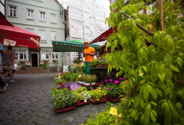 ol-kräuter-undmärchentag2018-Lingelcreek (92 von 119)