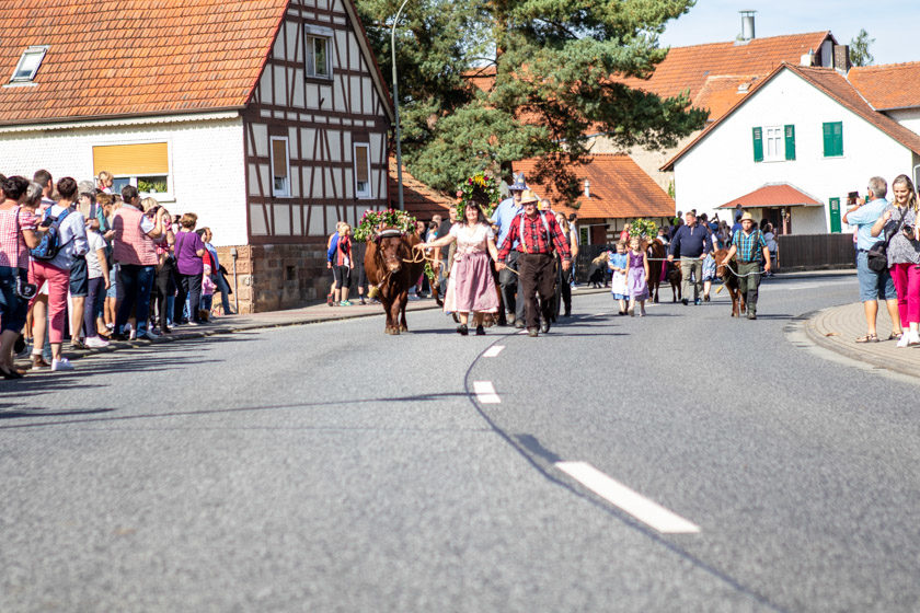 2019-09-15_LehrbacherAlmabtrieb-4