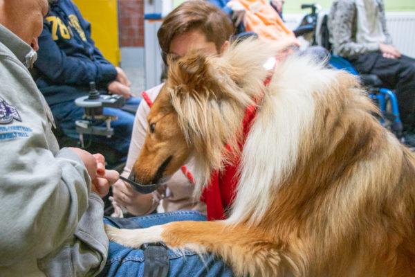 Therapiehunde Osthessen Kompass Leben (11 von 27)