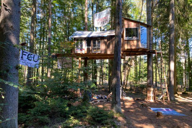 Widerstand in luftiger Höhe: Zu Besuch im Dannenröder Wald